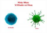 Vi khuẩn và virus loại nào nguy hiểm hơn?